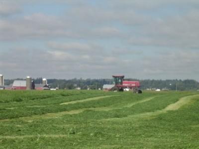 GrassmowingDSC03510