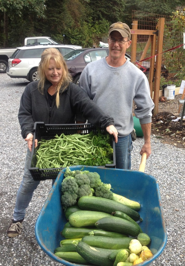 photo: Bill Sterling Angala and Bill Dinwitty volunteer in the harvesting in the gardens at the Chuckanut Center, located on Chuckanut Drive at the old rose garden site just north of Fairhaven Park.