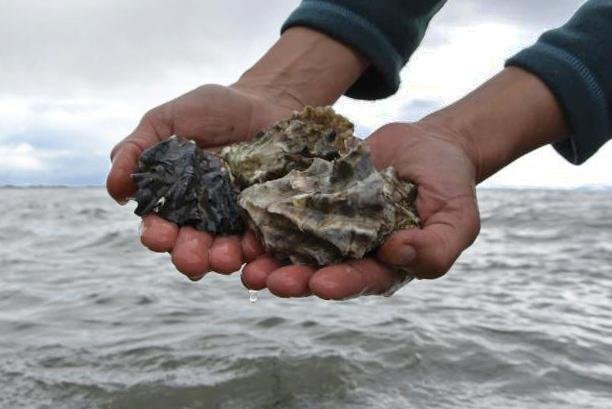 Shellfish. photo: RE Sources for Sustainable Communities