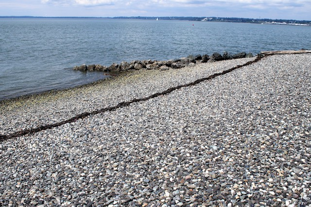 A restructured beach at Marine Park in Bellingham. Note the long, gradual slope, the groin projecting into the water and the line of beach wrack from the eelgrass meadow just offshore. photo: by Ron Keinknecht