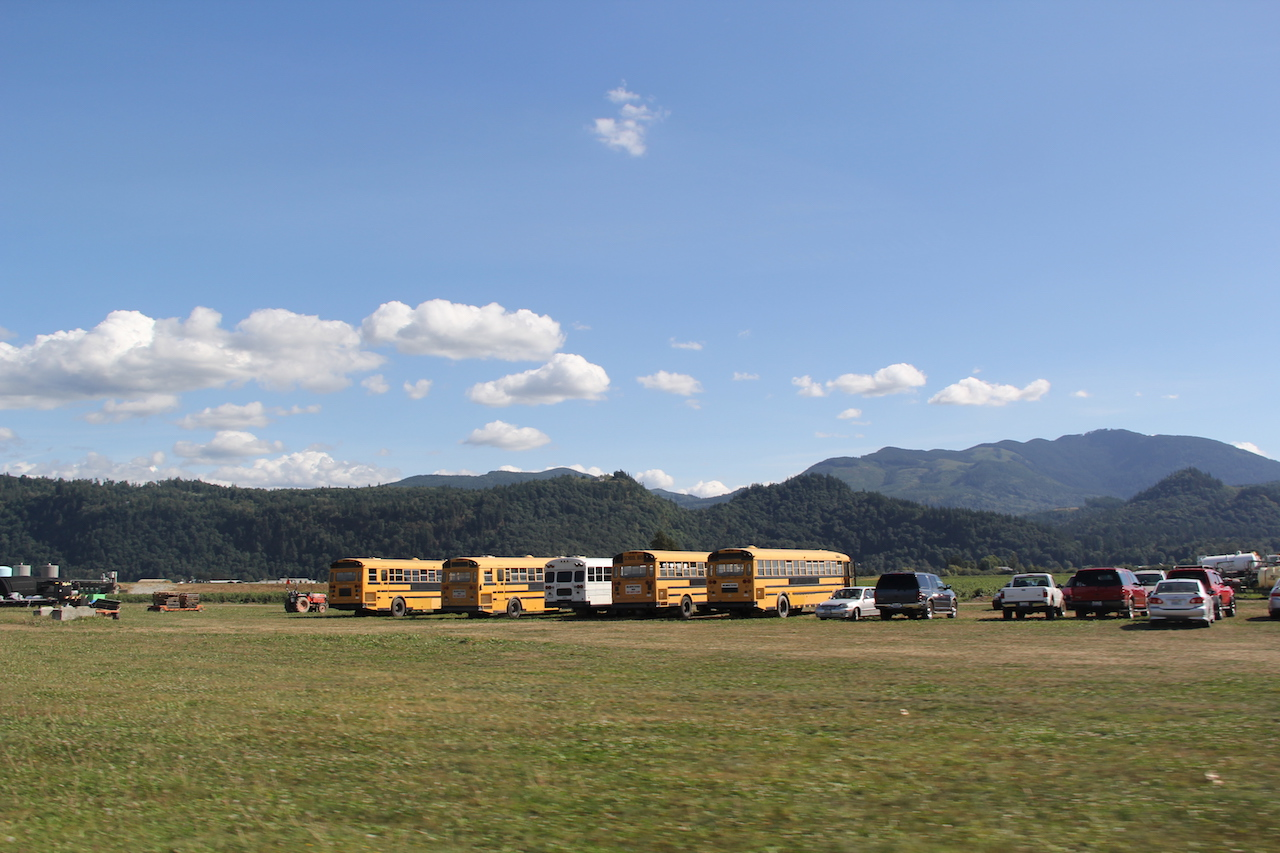 Old school buses wait to transport workers at Sarbanand to the blueberry fields spread along Rock Road. photo: Andrew Wise